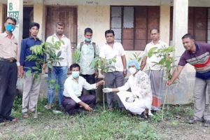 মতলব উত্তরে শিল্পপতি নাসির উদ্দিন মিয়ার বৃক্ষরোপন