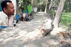চাঁদপুর কল্যাণপুরে সরকারি গাছ কেটে চুরি